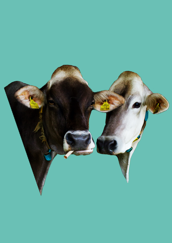 Stella Butz Photography Cows Collage