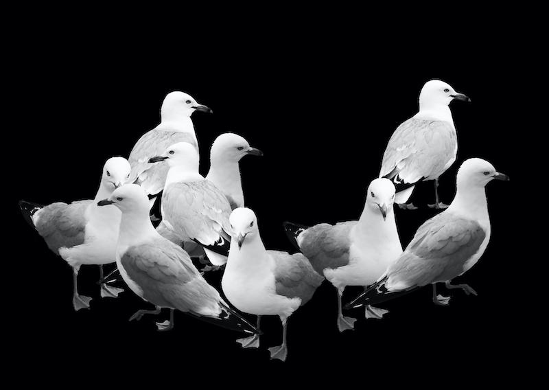 Stella Butz Photography Gulls Behind